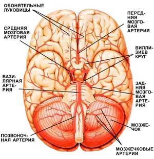 МРТ головы и сосудов головного мозга