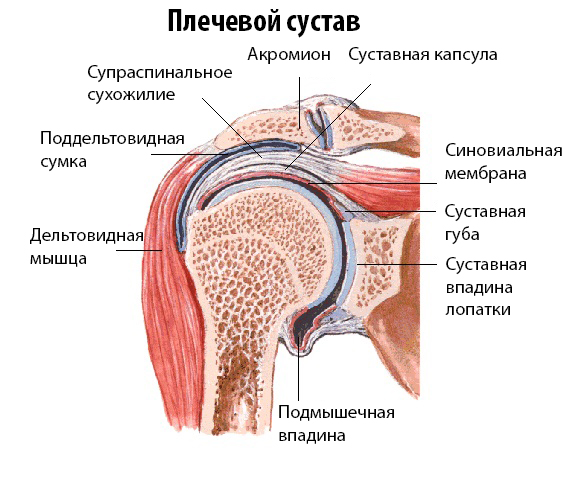 МРТ плечевого сустава