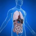 МРТ оранов брюшной полости и забрюшенного пространства