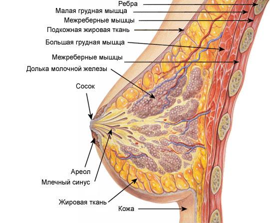 Атеросклероз сосудов головного мозга. профилактика.