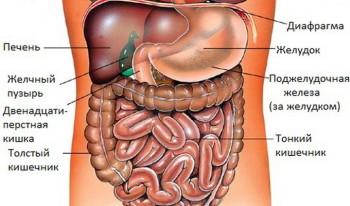 Строение брюшной полости на КТ