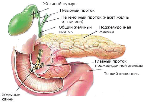 КТ поджелудочной железы