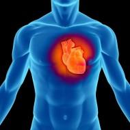 Что показывает МРТ сердца
