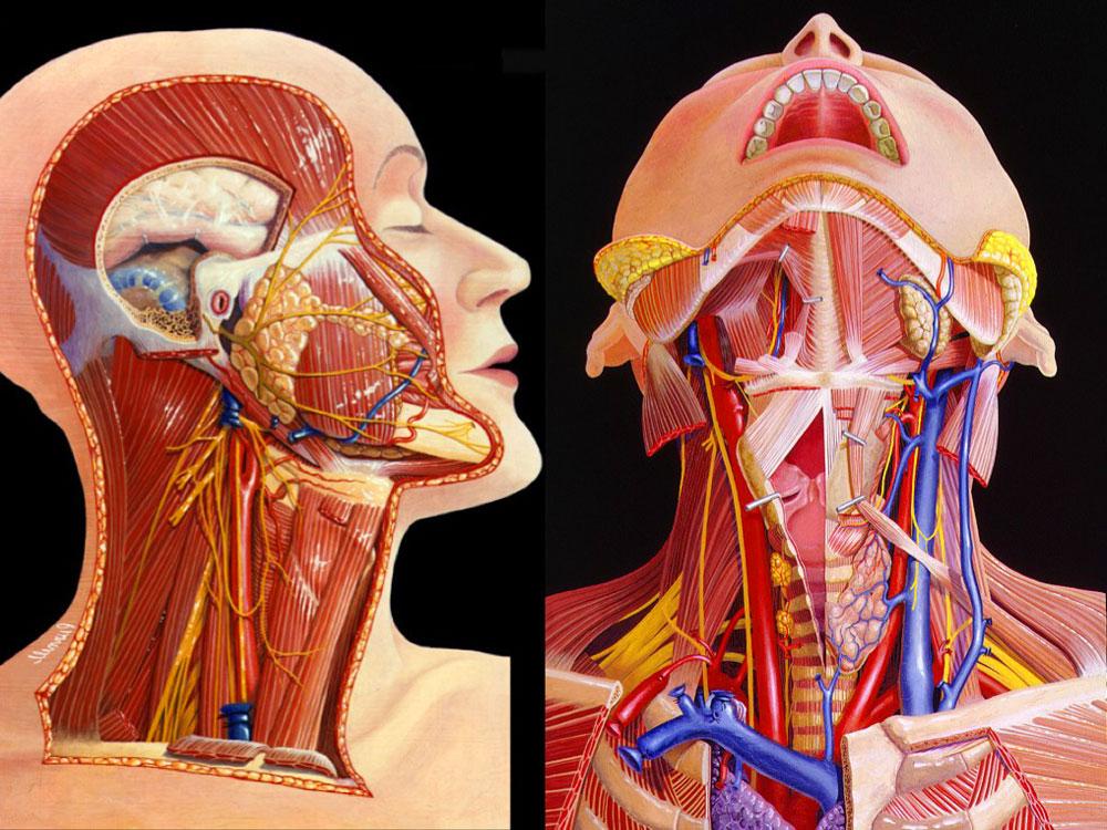 МРТ мягких тканей шеи