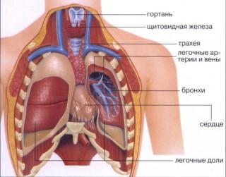 КТ органов грудной клетки (строение)